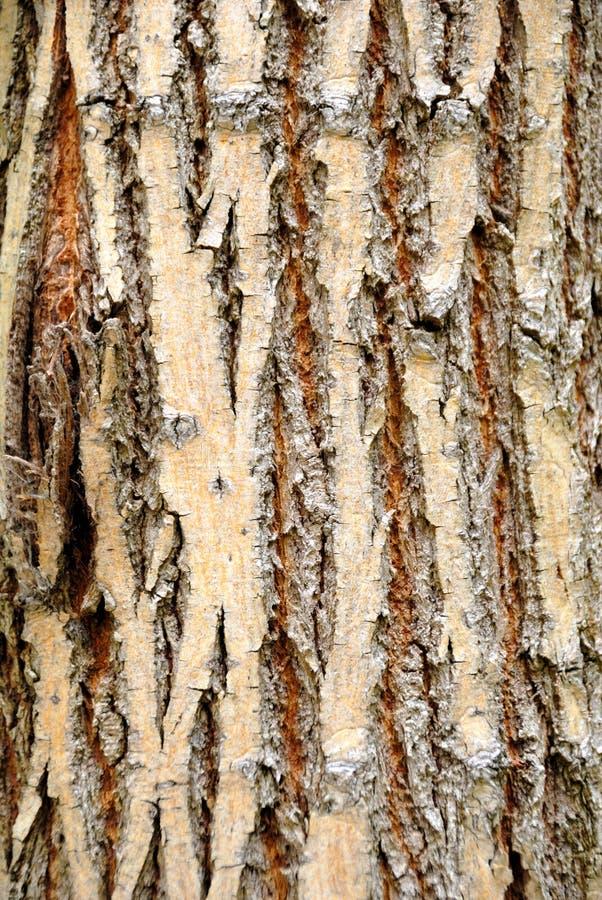 Download Corteccia di albero fotografia stock. Immagine di agricoltura - 7305298