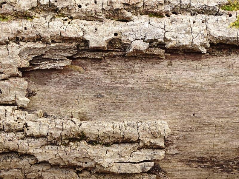 Corteccia di albero fotografia stock