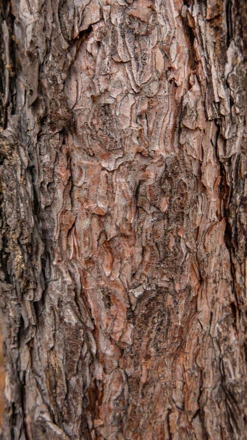 Corteccia di albero come struttura del fondo immagini stock libere da diritti