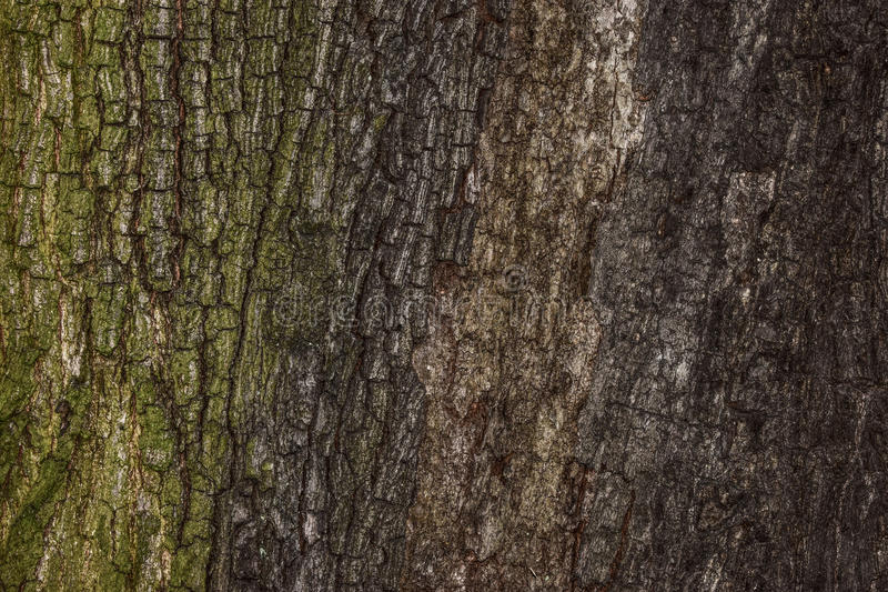 Corteccia di albero del fondo immagini stock