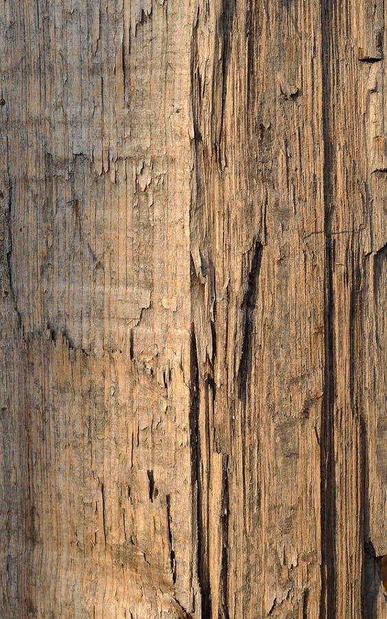 Corteccia di albero del primo piano immagini stock libere da diritti
