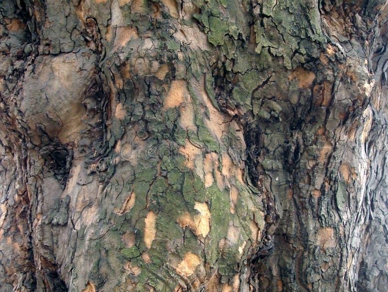 Corteccia di albero di Platane fotografia stock