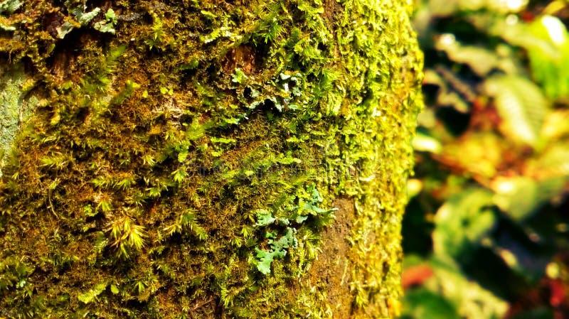 Corteccia di albero e epiphyte fotografia stock