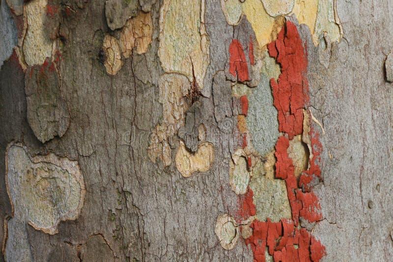 Corteccia di albero di lerciume con pittura arancio fotografia stock libera da diritti
