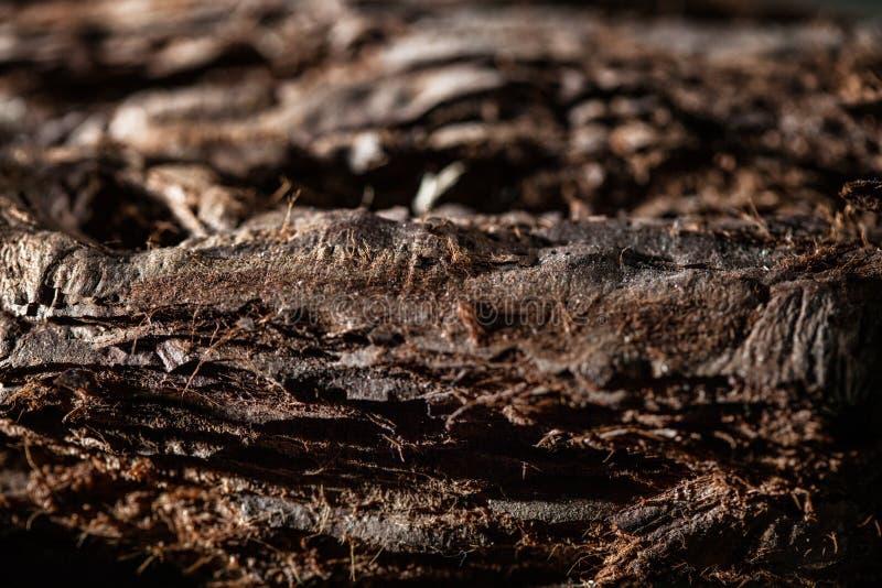 Corteccia di albero in natura fotografia stock