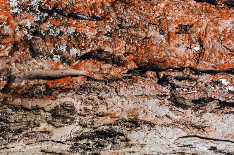 Corteccia di albero naturale Struttura naturale fotografia stock
