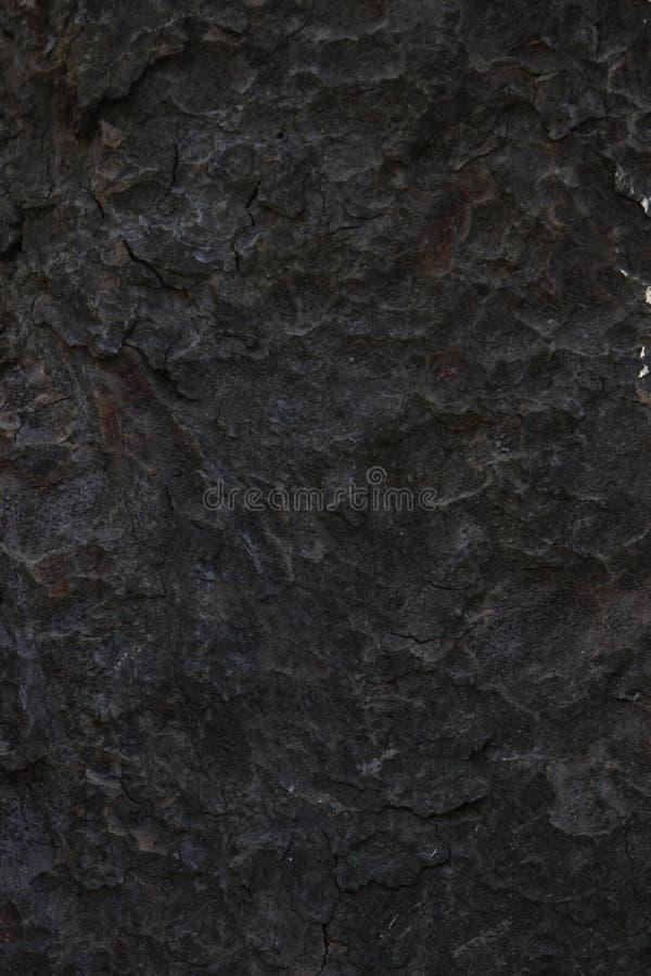 Corteccia di albero nera scura fotografia stock