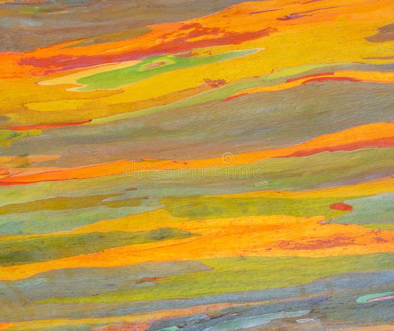 Corteccia di albero orizzontale dell'eucalyptus dell'arcobaleno fotografie stock libere da diritti