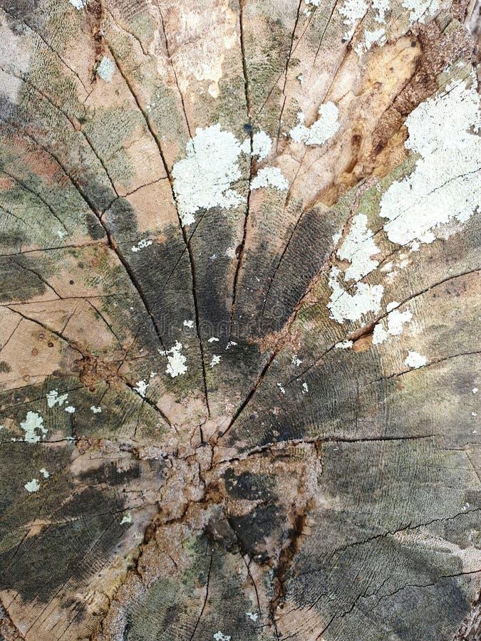 Corteccia di albero Patern immagine stock