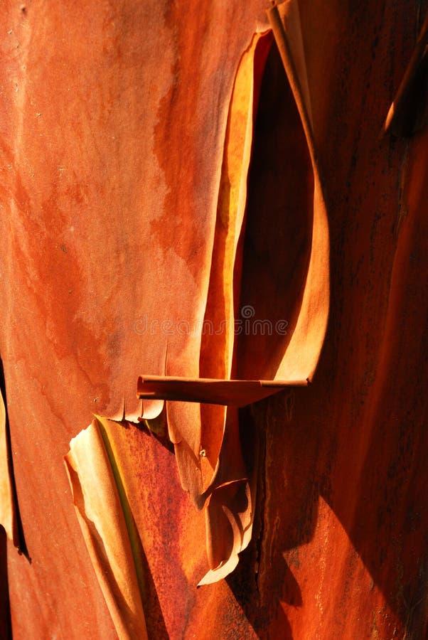 Corteccia di albero rossa fotografia stock libera da diritti