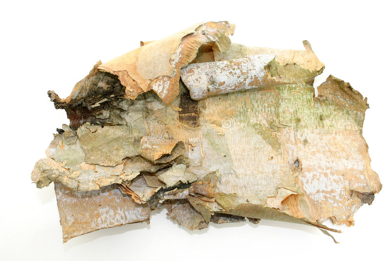 Corteccia Di Betulla Su Bianco Fotografie Stock