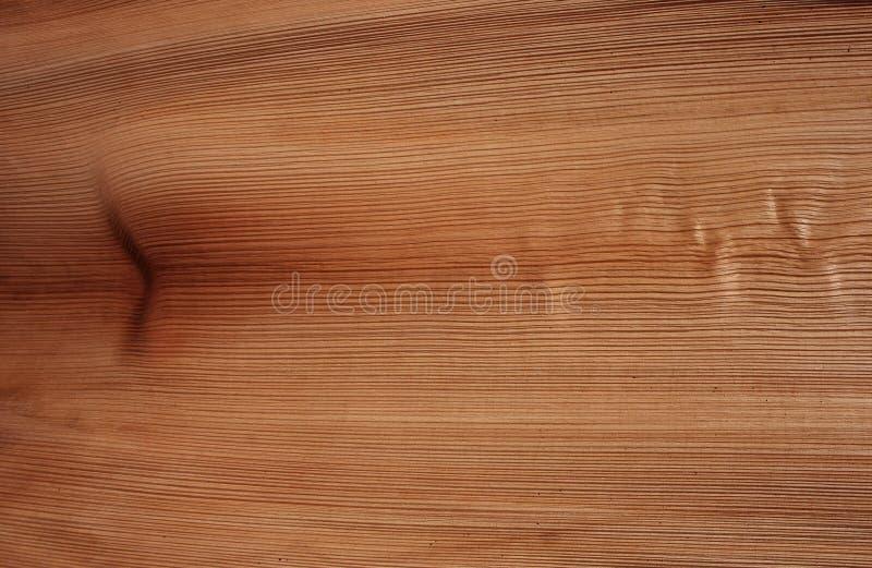 Corteccia di struttura della palma della coda di volpe fotografie stock