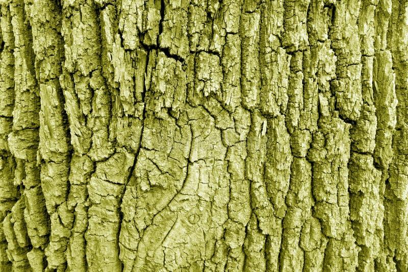Corteccia di vecchia grande struttura della quercia nel tono giallo fotografie stock libere da diritti
