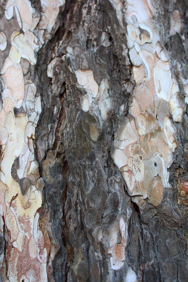 Corteccia, fondo, struttura, albero, vecchio, naturale, marrone, bianco, colore, progettazione, natura, a strisce, astratta, prim fotografie stock libere da diritti