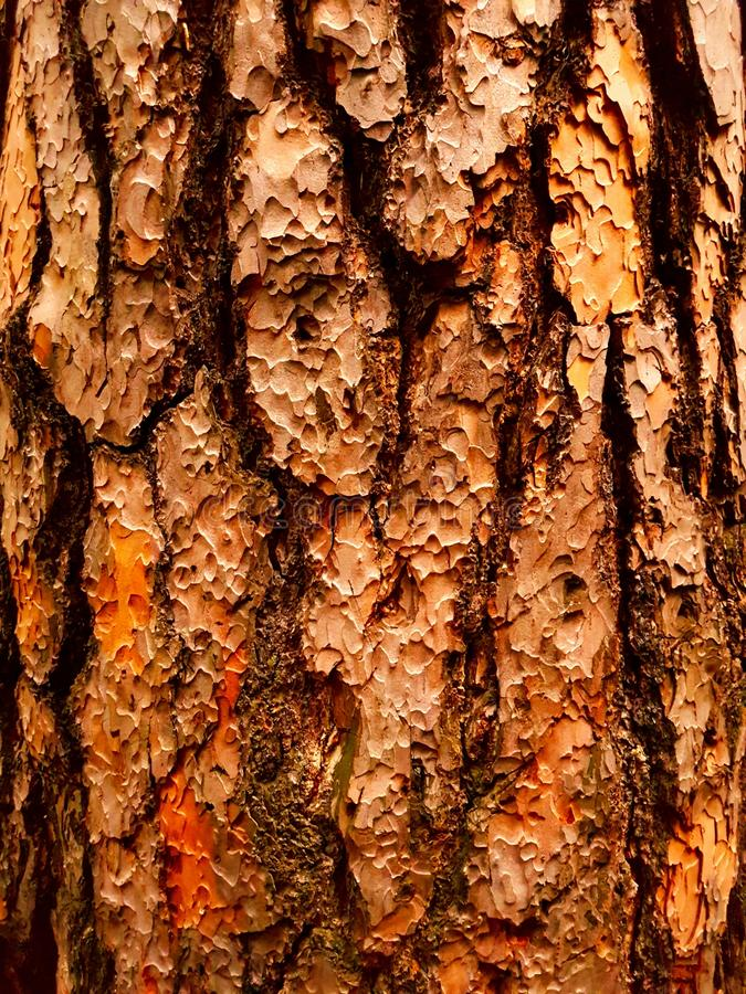 Corteccia legnosa immagini stock libere da diritti