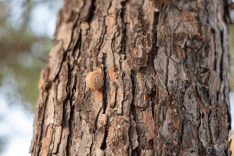 Corteccia marrone strutturata di grande albero del sud fotografia stock