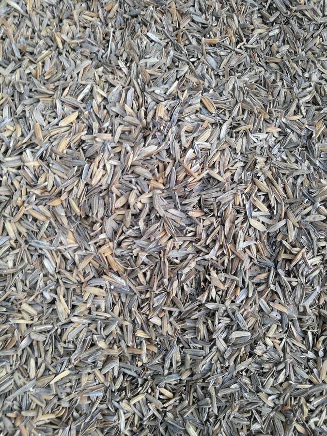 Corteccia secca del riso fotografie stock