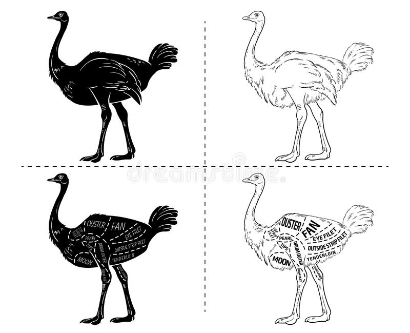 Cortes da carne da avestruz com elementos e nomes Preto isolado no fundo branco Carniceiro Shop ilustração stock