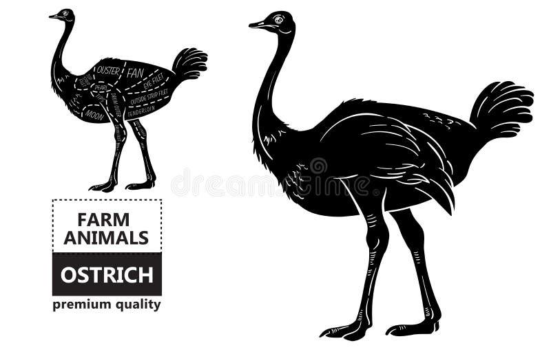 Cortes da carne da avestruz com elementos e nomes Preto isolado no fundo branco Carniceiro Shop ilustração royalty free