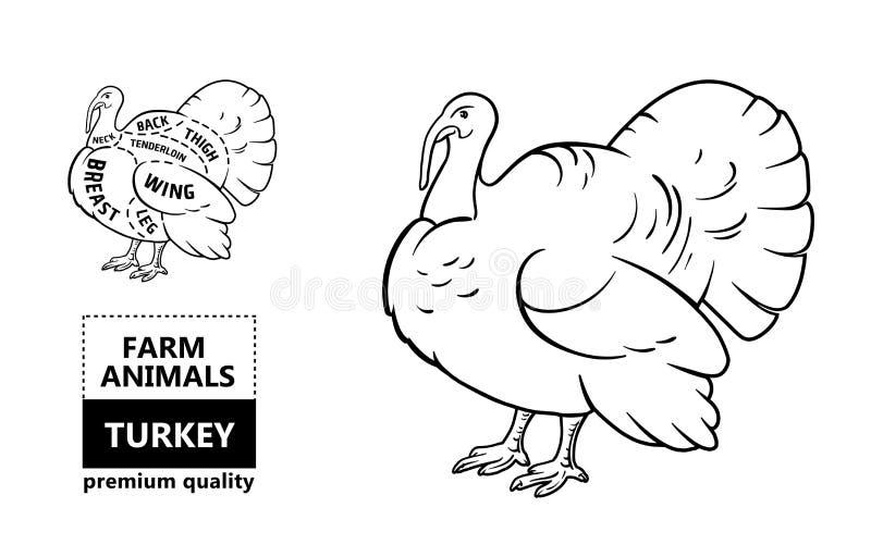 Cortes da carne Diagrama do carniceiro do cartaz e esquema - Turquia Tipográfico preto e branco desenhado à mão do vintage com te ilustração do vetor