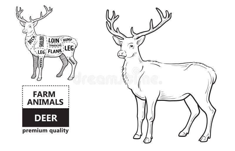 Cortes da carne dos cervos com elementos e nomes Preto isolado no fundo branco Carniceiro Shop ilustração do vetor