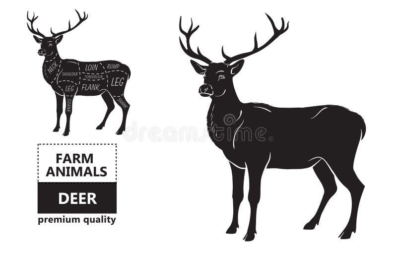 Cortes da carne dos cervos com elementos e nomes Preto isolado no fundo branco Carniceiro Shop ilustração royalty free