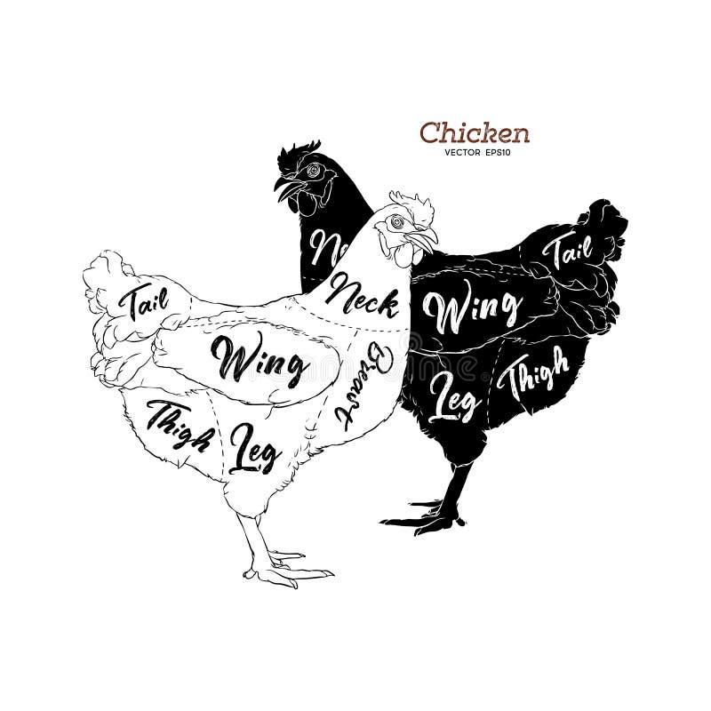 Cortes da galinha Diagramas para o açougue Esquema da galinha Vect ilustração royalty free