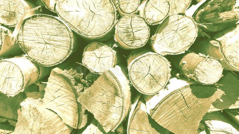 Cortes da ?rvore, vidoeiro e close-up da lenha do carvalho fotografia de stock