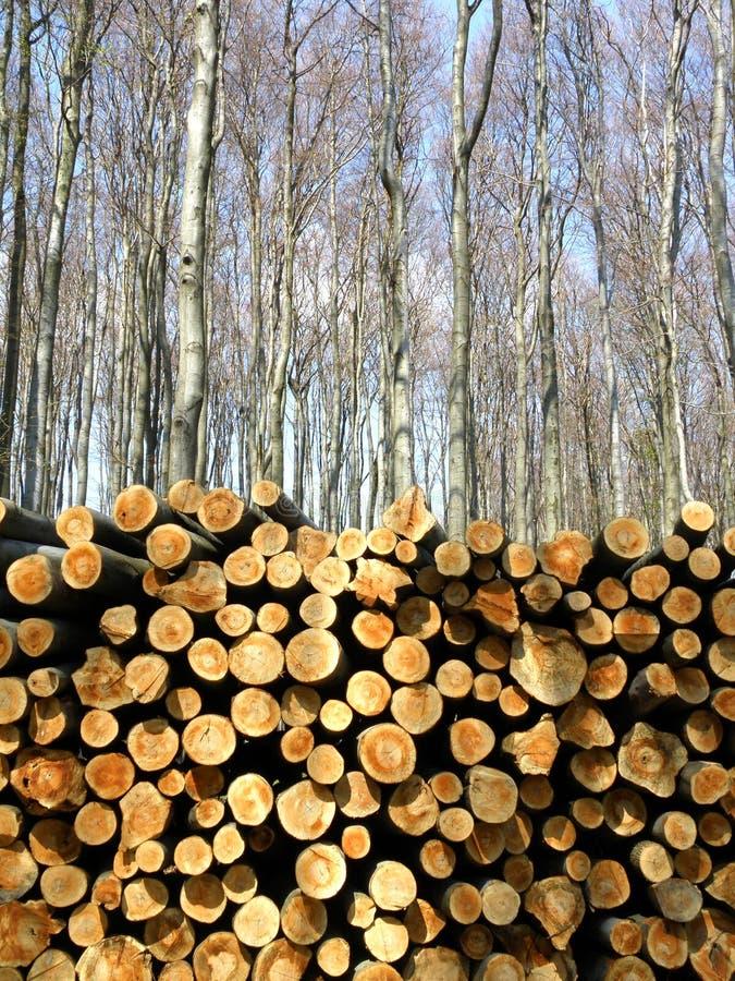 Cortes de madera en bosque del invierno fotografía de archivo libre de regalías