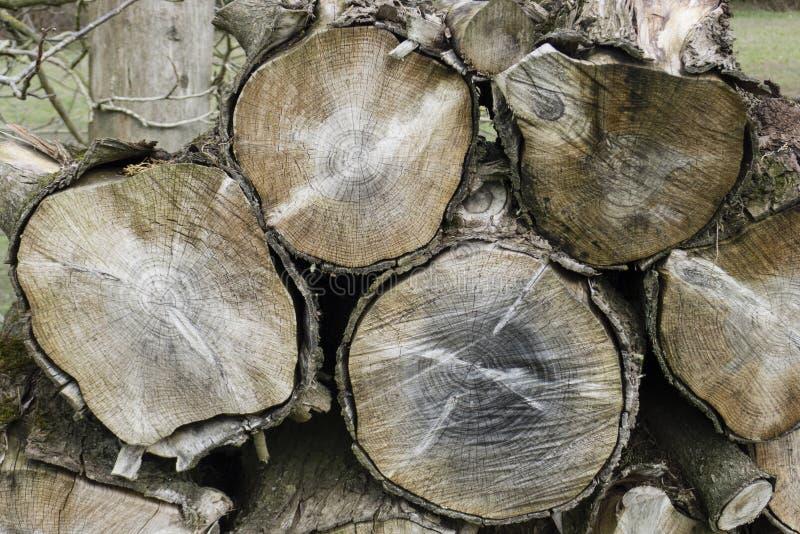 Cortes del tronco de árbol que muestran los anillos de crecimiento imágenes de archivo libres de regalías