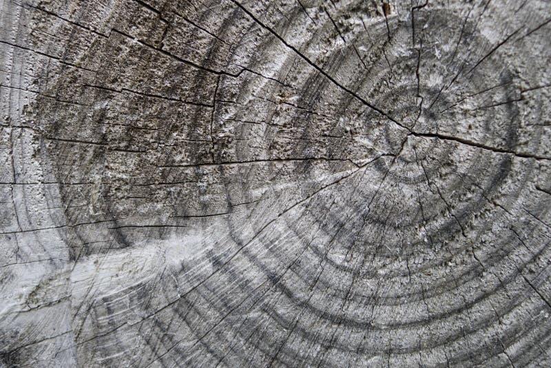 Cortes del tronco de árbol que muestran los anillos de crecimiento fotografía de archivo