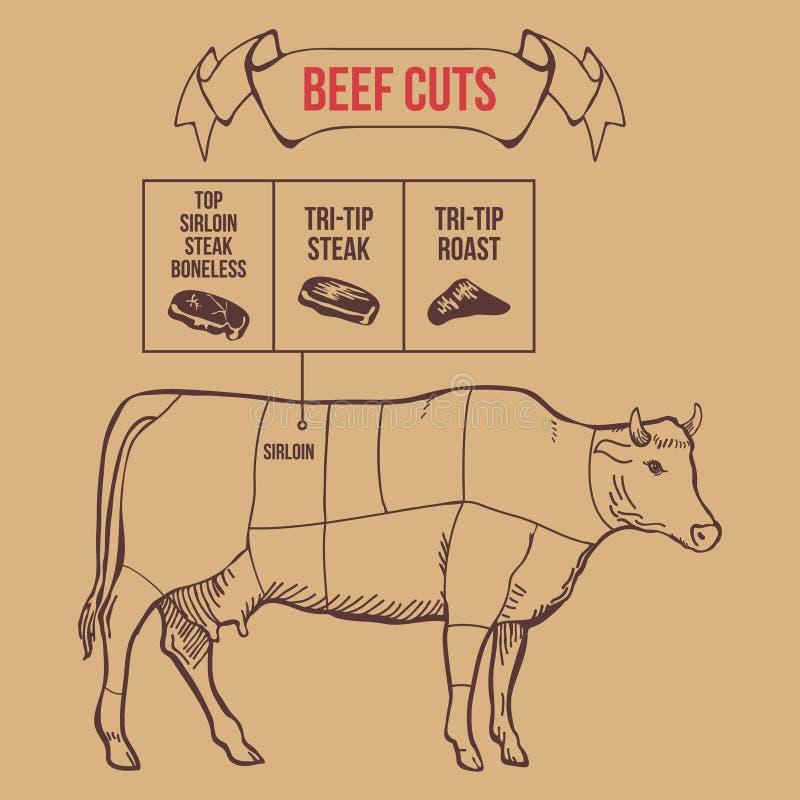 Cortes do carniceiro do vintage do vetor do esquema da carne ilustração royalty free