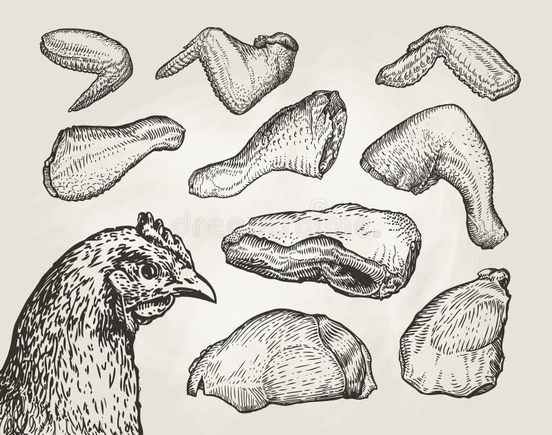 Cortes tirados mão, carne da galinha Esboço do açougue Ilustração do vetor do vintage ilustração do vetor