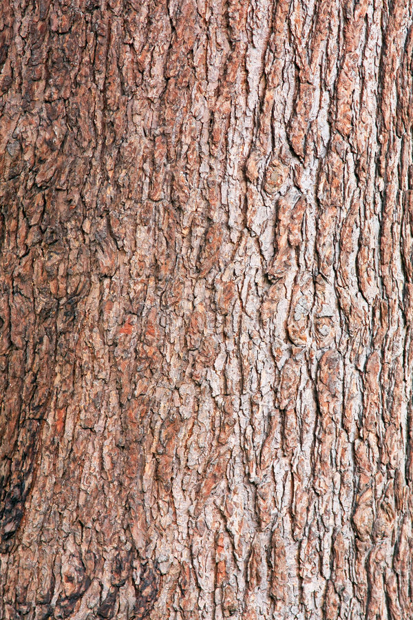 Cortex photo libre de droits