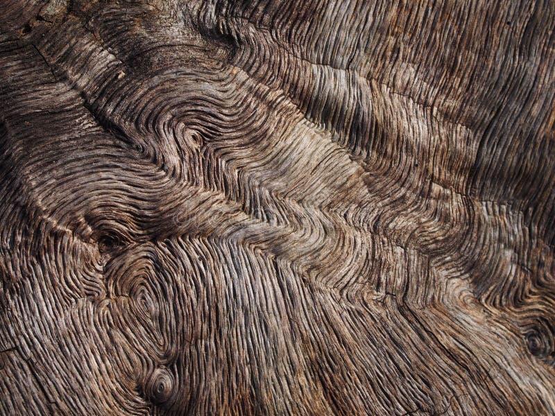 Cortex d'un arbre photos stock