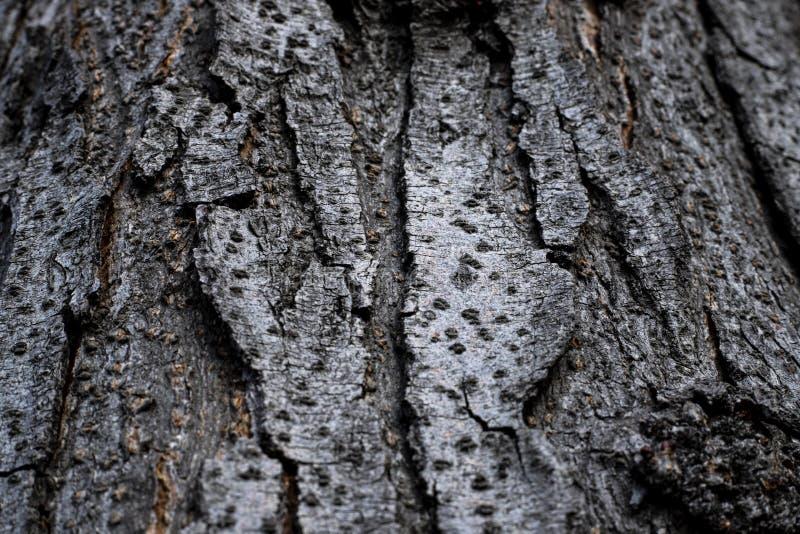 Cortex de Brown d'un arbre photo libre de droits