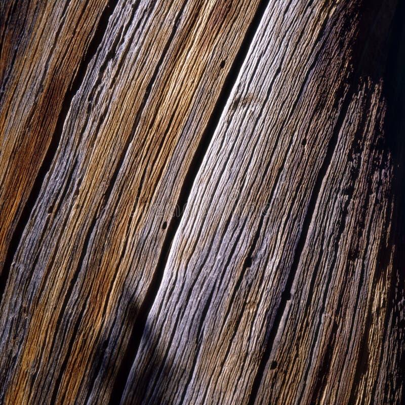 Cortex de pin images libres de droits