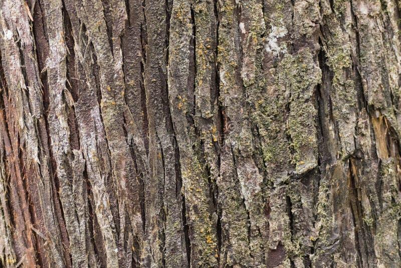 Cortex drzewa fotografia stock