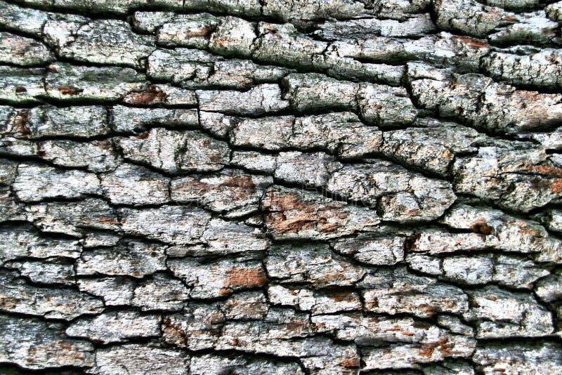 Cortex foncé de bois dur image libre de droits