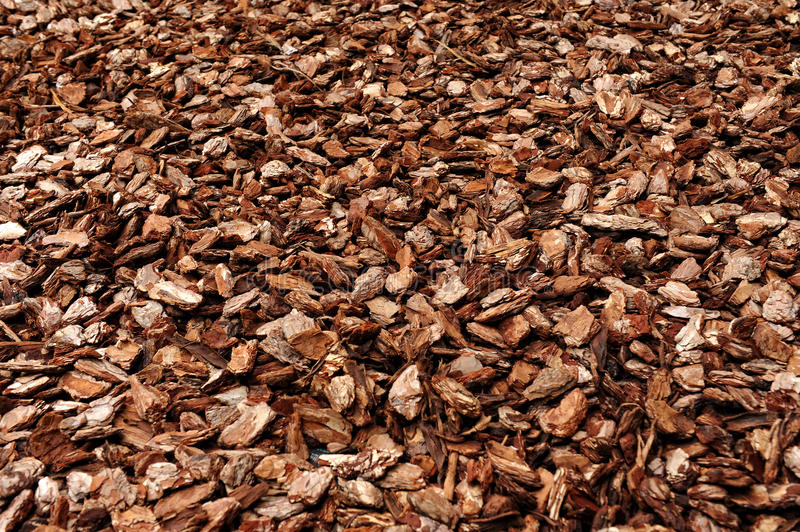 Cortex or wood chip texture stock image of