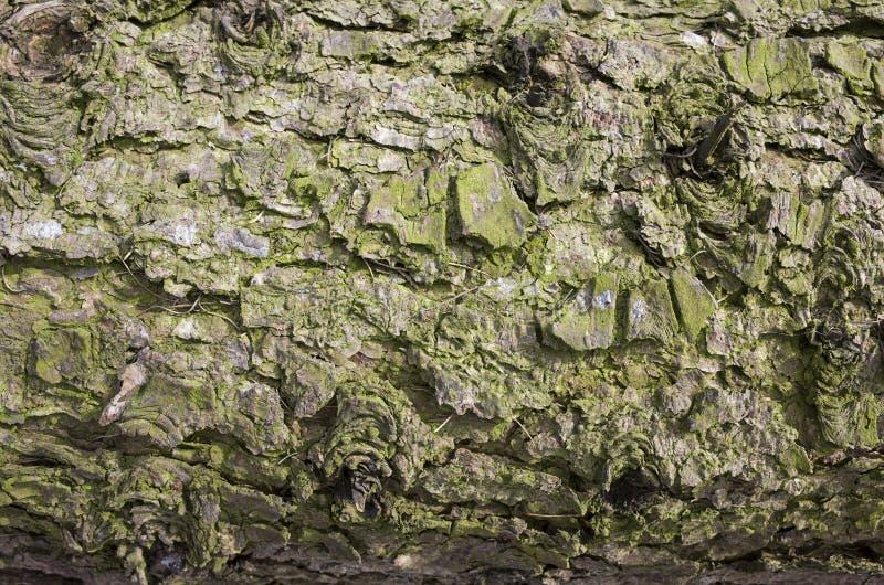 Corteza con el fondo del musgo foto de archivo libre de regalías