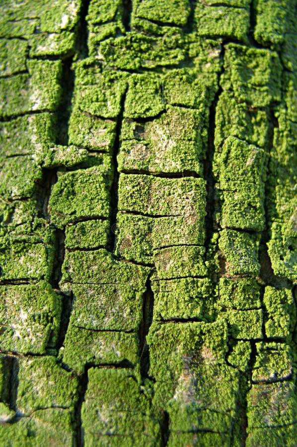 Corteza cubierta de musgo fotografía de archivo