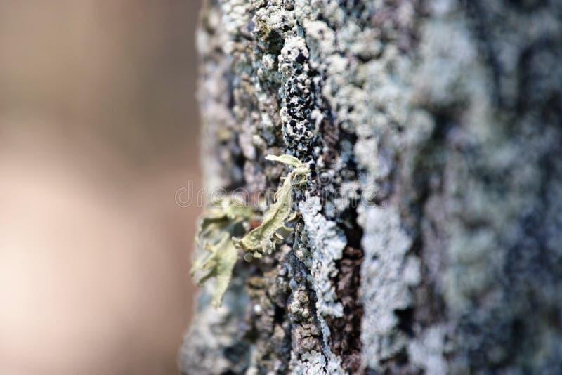 Corteza cubierta de musgo de Redcliffe fotografía de archivo