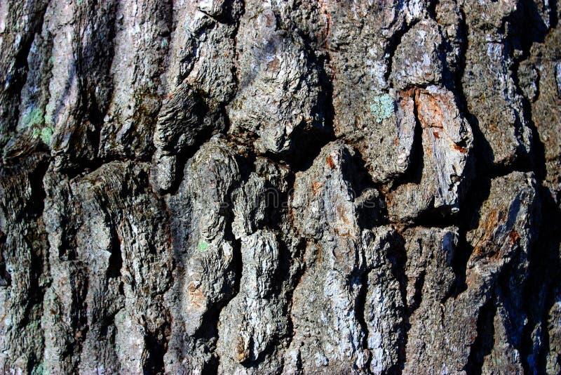 Download Corteza de árbol imagen de archivo. Imagen de corteza - 7278285