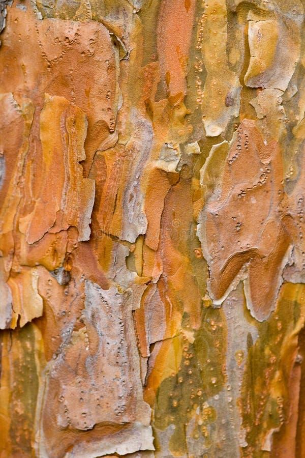 Corteza de árbol - acerifolia del Platanus fotografía de archivo