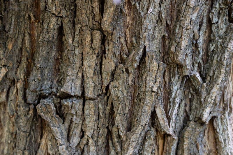 Corteza de árbol borrosa fondo de la textura de la corteza de árbol foto de archivo