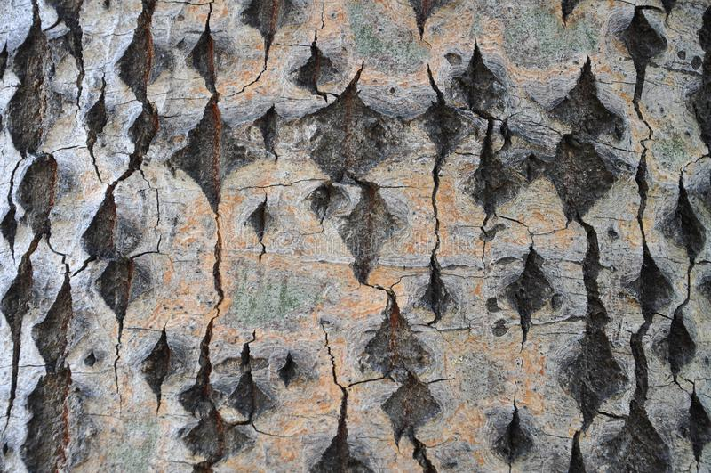 Corteza de árbol con texturas hermosas fotos de archivo libres de regalías