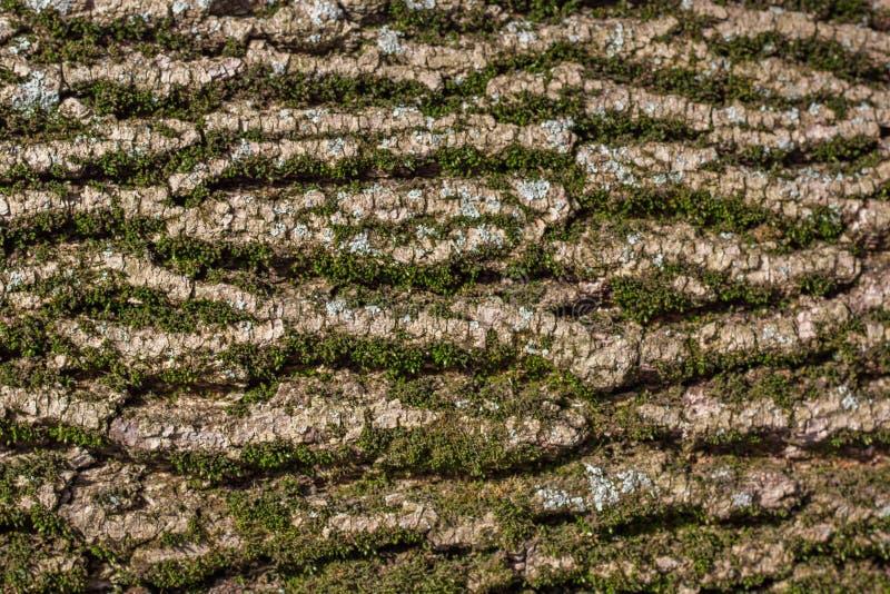 Corteza de árbol cubierta de musgo imagenes de archivo