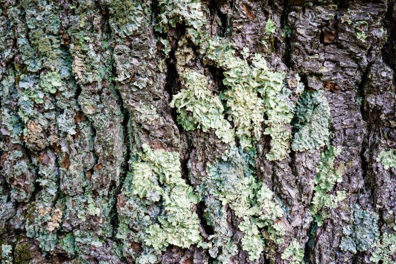 Corteza de árbol cubierta de musgo foto de archivo libre de regalías