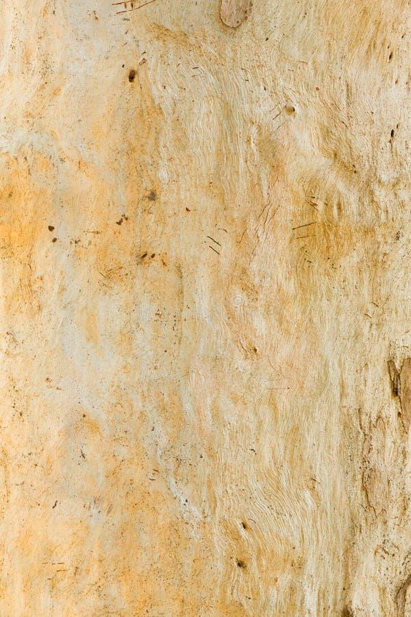 Corteza de árbol de eucalipto imágenes de archivo libres de regalías